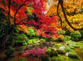 Puzzle 1500 Pezzi Clementoni Autumn Park | Puzzle Paesaggi