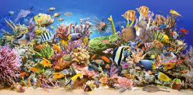 Underwater Life (Puzzle 4000 pezzi Castorland)