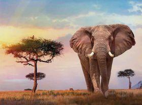 Puzzle 500 Pezzi Clementoni African Sunset | Puzzle Paesaggi