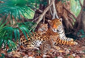 Jaguars in the Jungle (Puzzle 3000 pezzi Castorland)
