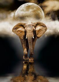 Puzzle Animali 1000 pezzi Clementoni The Elephant