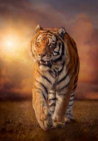 Puzzle Animali 1500 pezzi Clementoni Tiger