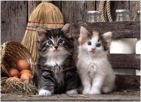 Puzzle 1000 pezzi Lovely Kittens Clementoni su ARSLUDICA.com