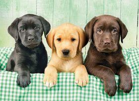 Puzzle Animali 1000 pezzi Clementoni I tre Labrador