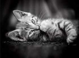 Puzzle Animali 1000 pezzi Clementoni Kitty
