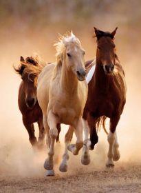 Puzzle Animali 1000 pezzi Clementoni Running Horses