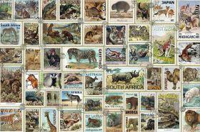 Puzzle Animali 3000 pezzi Ravensburger Il regno animale