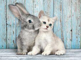 Puzzle 500 pezzi Coniglietto e Gattino Clementoni su ARSLUDICA.com