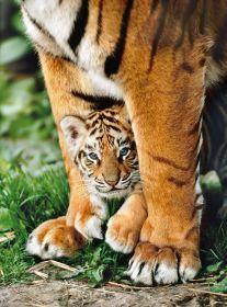Puzzle 500 pezzi Cucciolo di Tigre del Bengala Clementoni su ARSLUDICA.com