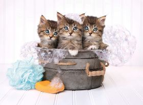 Puzzle 500 pezzi Kitten and Soap Clementoni su ARSLUDICA.com