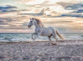 Puzzle 500 Pezzi Ravensburger Cavallo in Spiaggia | Puzzle Animali