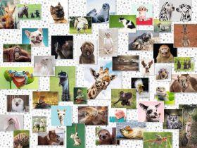 Puzzle 1500 Pezzi Ravensburger Collage di Animali Divertenti | Puzzle Animali