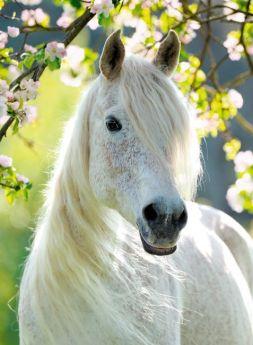 Primavera Equestre (Puzzle 500 pezzi Ravensburger)
