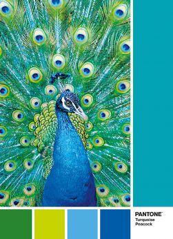Puzzle Composizioni 1000 pezzi Clementoni Pantone 7466 Turquoise Peacock