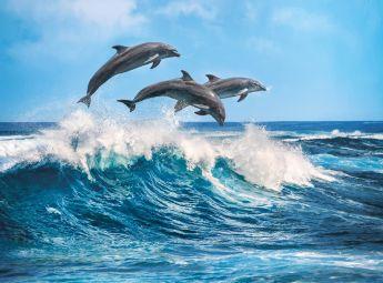 Puzzle Animali 500 pezzi Clementoni Delfini