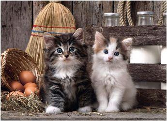 Puzzle Animali 1000 Pezzi Clementoni Adorabili Gattini