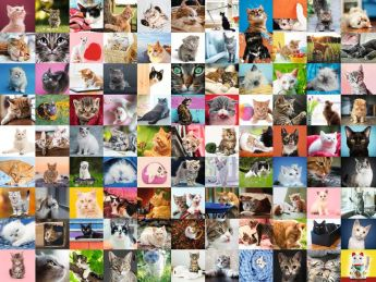 Puzzle Animali 1500 pezzi Ravensburger 99 Gatti