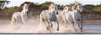 Puzzle 1000 pezzi Panorama Running Horses Clementoni su ARSLUDICA.com